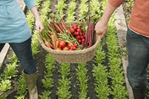 proposer des paniers de légumes issus de vos jardins d'entreprise